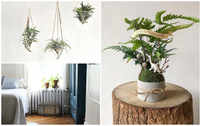 植物 植物佈置 佈置 植栽挑選 植栽推薦 居家盆栽 室內植物設計 居家植物 居家植物佈置