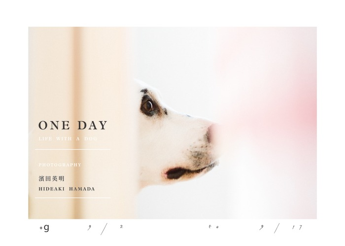 """Hideaki Hamada's """"One Day—Life With A Dog"""" Exhibition Flyer at Xiaoqi +g gallery in Taipei"""
