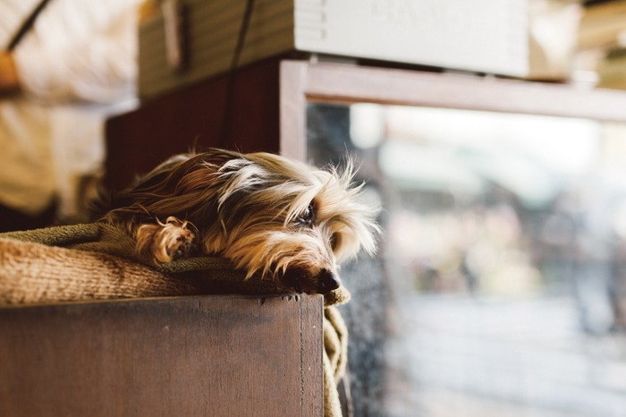 """Photo of dog looking out the window from Hideaki Hamada's photography collection """"One Day—Life With A Dog Photograph"""""""