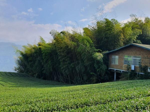嘉義瑞峰一日遊-賴坤陽的家