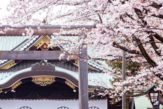 日本東京靖國神社櫻花季 賞櫻行程
