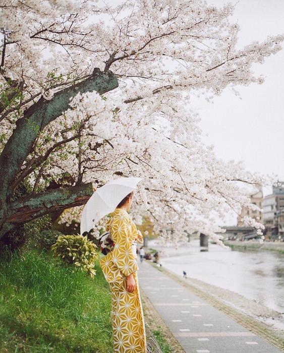 日本東京大阪櫻花季 賞櫻行程