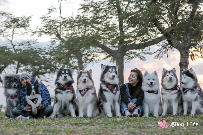 哈 Dog Life