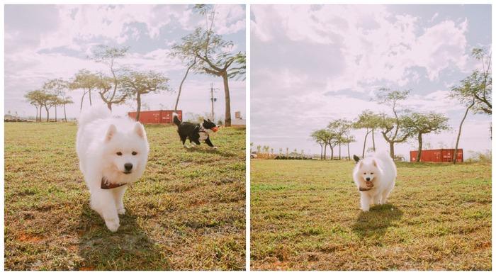 哈 Dog Life - 小羊