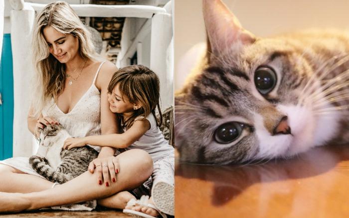 懷孕可以養貓嗎 弓漿蟲感染