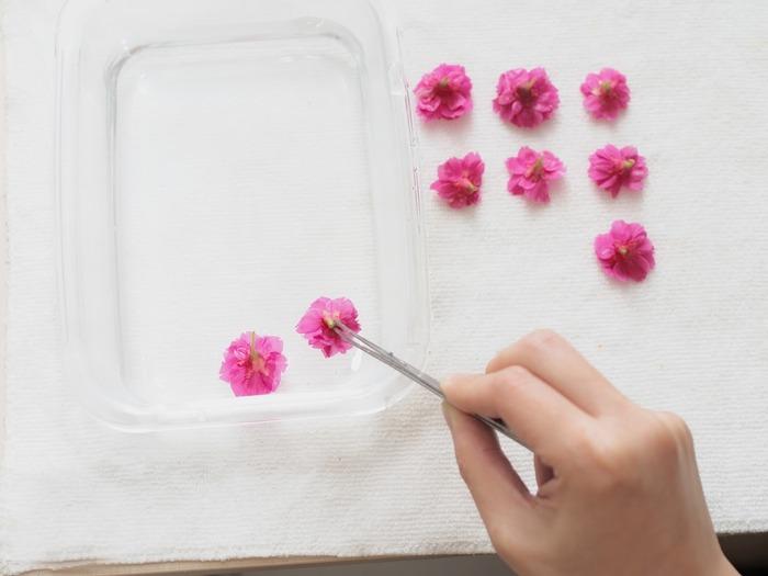 櫻花乾燥花製作步驟